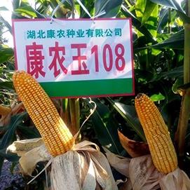 康农玉108